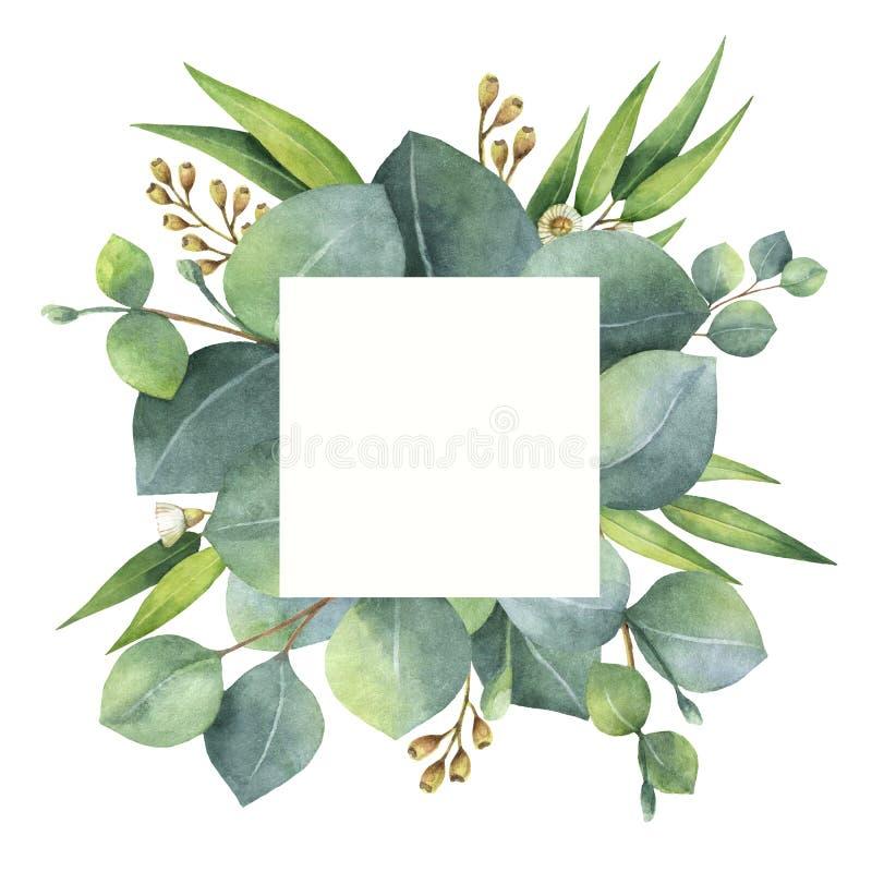 水彩与玉树叶子和分支的正方形花圈 向量例证