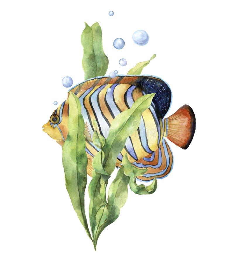 水彩与鱼的水族馆卡片 与神仙鱼、昆布属植物分支和气泡的手画水下的印刷品 库存例证