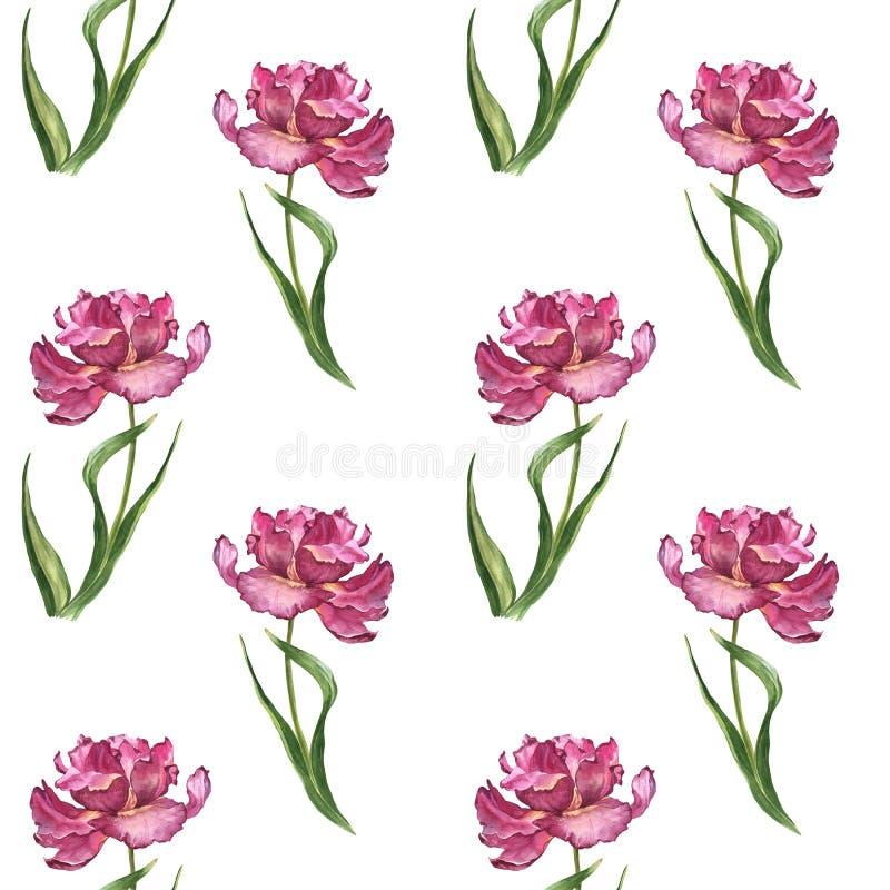 水彩五颜六色的春天和夏天花无缝的样式与桃红色郁金香 免版税图库摄影