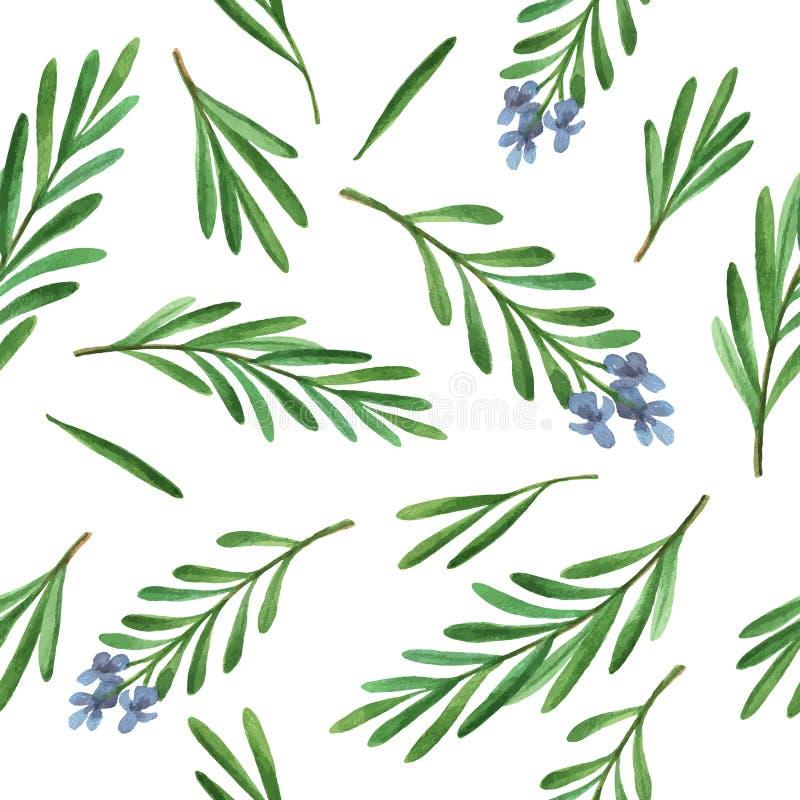水彩传染媒介无缝的样式手拉的草本迷迭香 向量例证