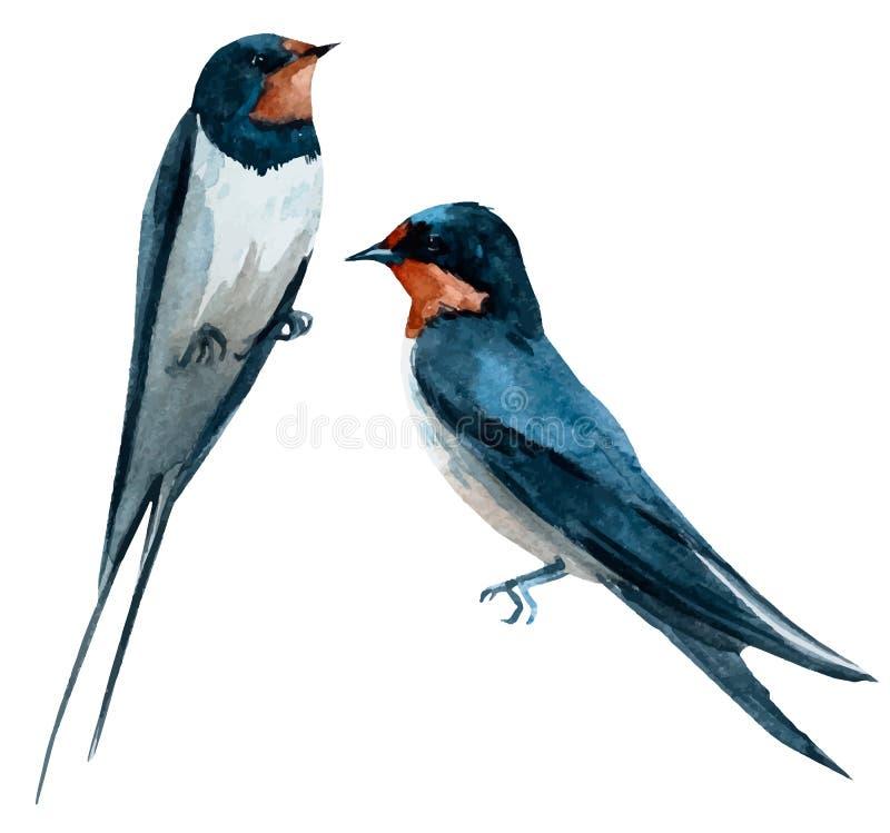 水彩传染媒介燕子鸟 库存例证