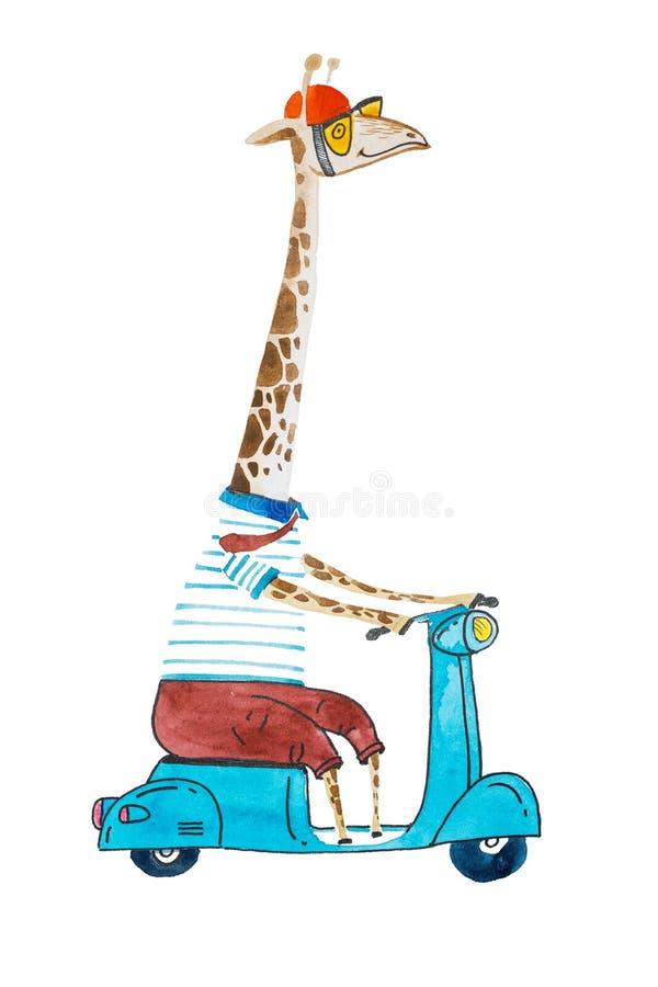 水彩动画片长颈鹿在t粪和乘坐滑行车的长裤头戴盔甲的和太阳镜装饰了 向量例证