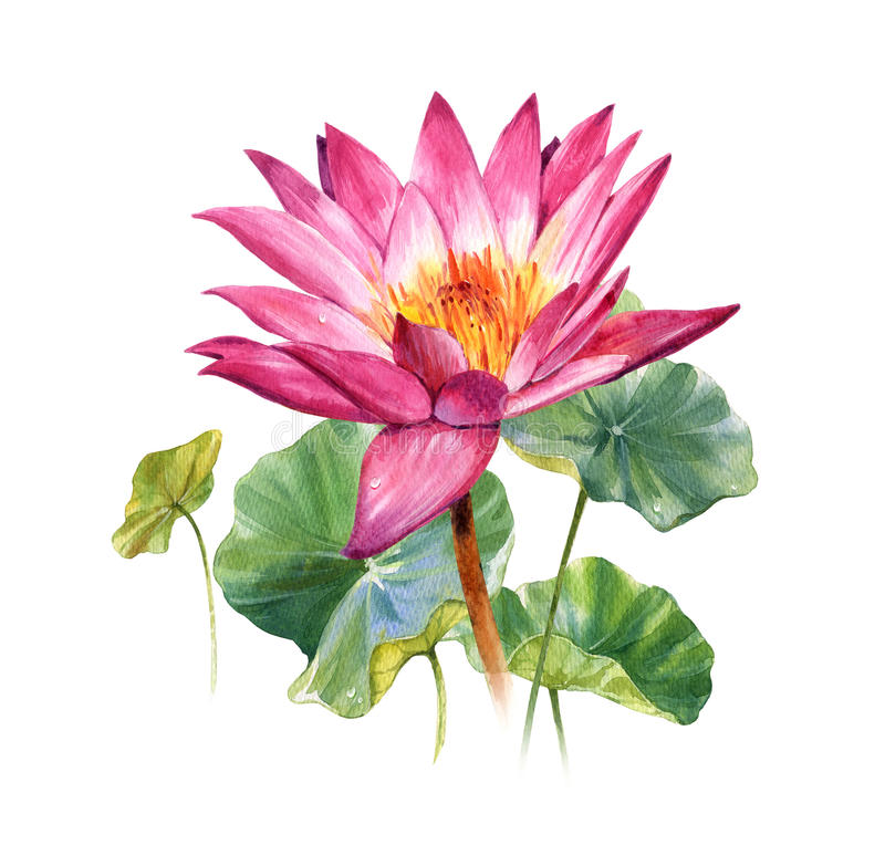 水彩叶子和莲花例证绘画  皇族释放例证