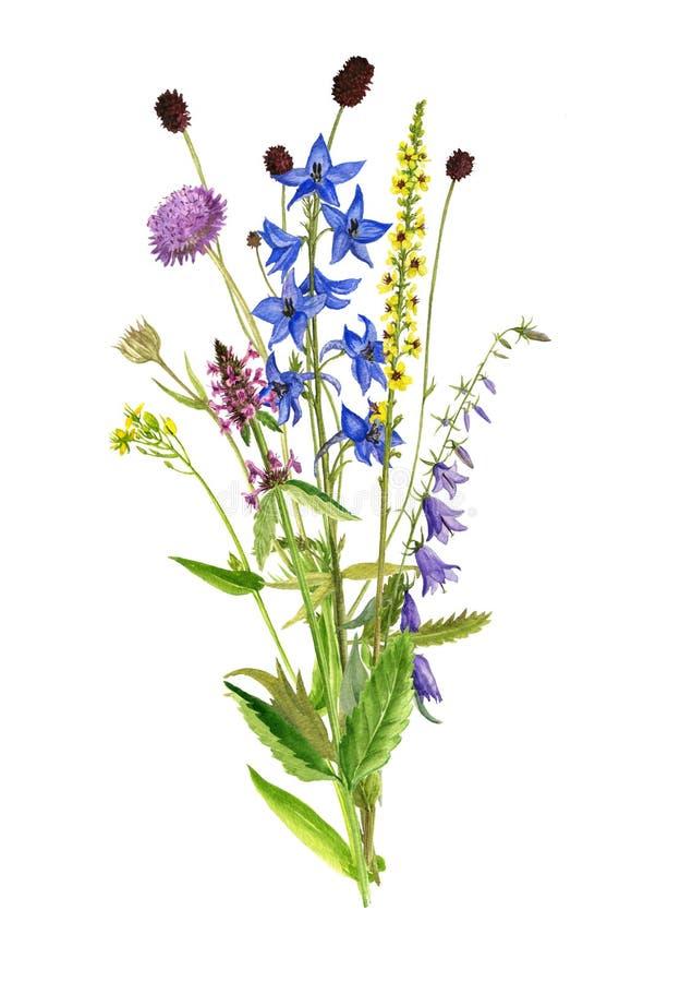 水彩图画花和植物 皇族释放例证