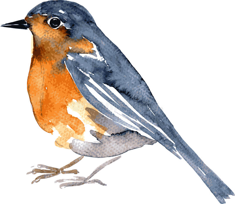 水彩图画鸟 库存图片