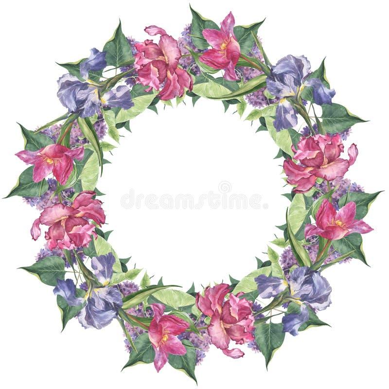 水彩圆的框架设置了与桃红色郁金香和虹膜花 库存照片