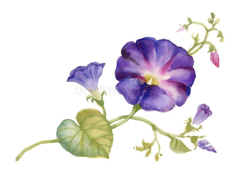 水彩夏天庭院开花的旋花类的植物发芽花 库存例证