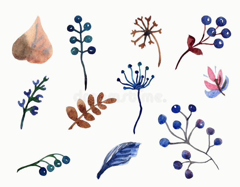 水彩套花叶子、分支和莓果 库存例证