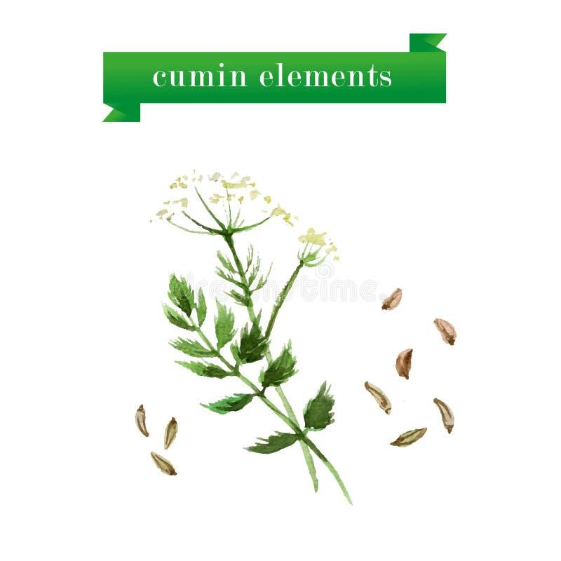 水彩小茴香的草本汇集 向量例证