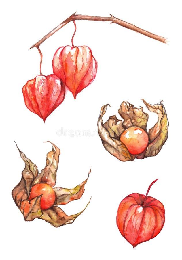 水彩手拉的空泡果子莓果集合 库存例证