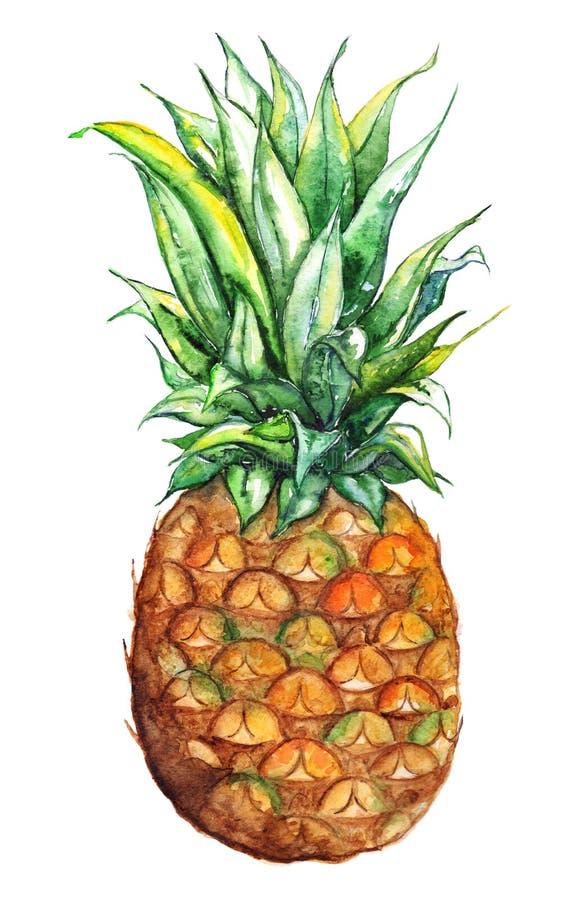 水彩手拉的菠萝异乎寻常的热带水果 库存例证