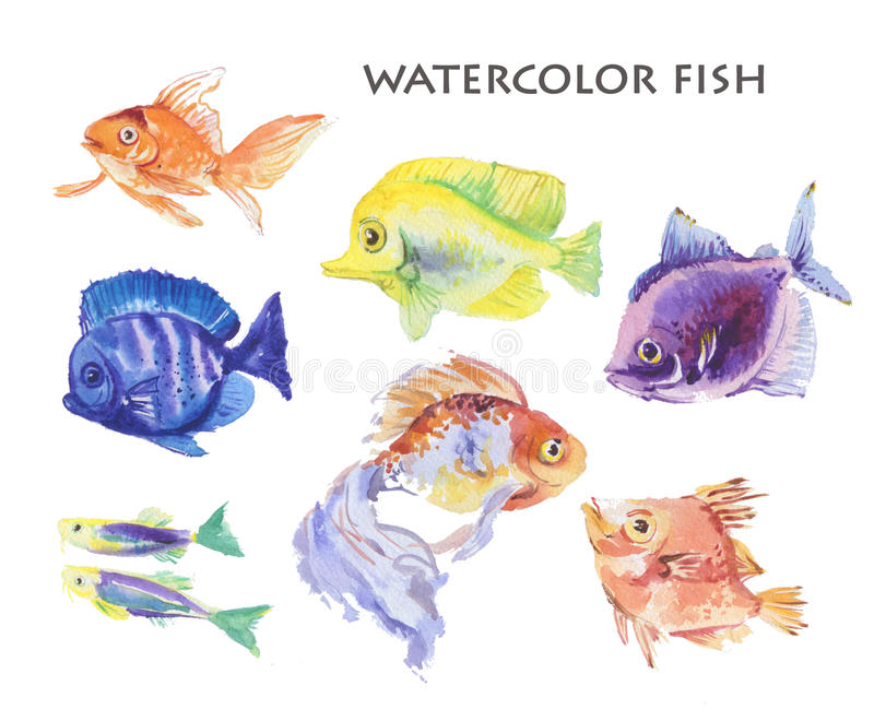 水彩手拉的鱼例证 库存例证