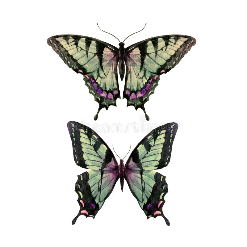 水彩手拉的蝴蝶 库存例证