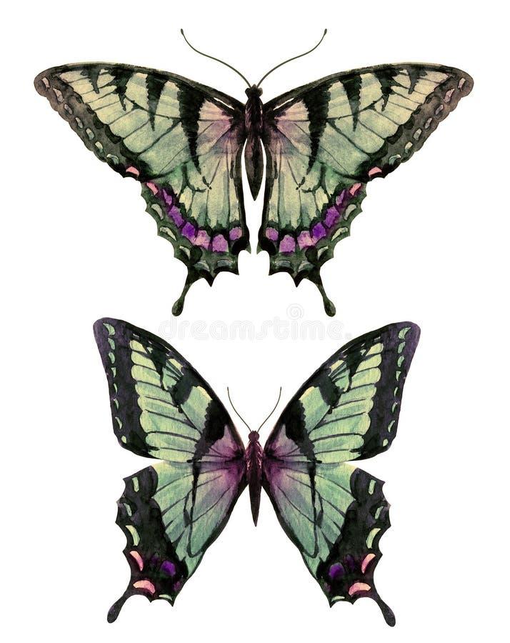 水彩手拉的蝴蝶 向量例证