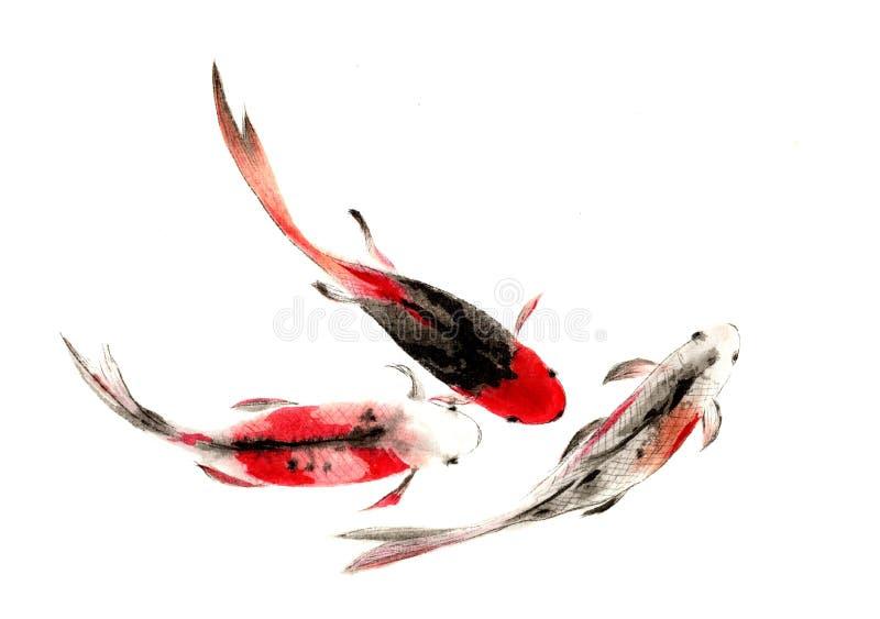 水彩手画中国鲤鱼 向量例证