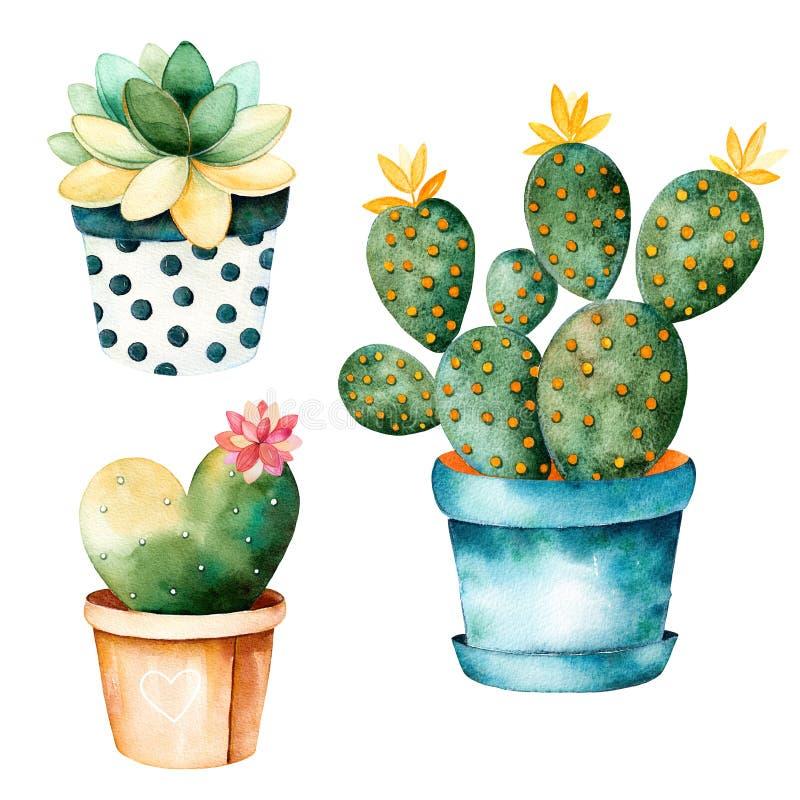 水彩手画仙人掌植物和多汁植物罐的 向量例证