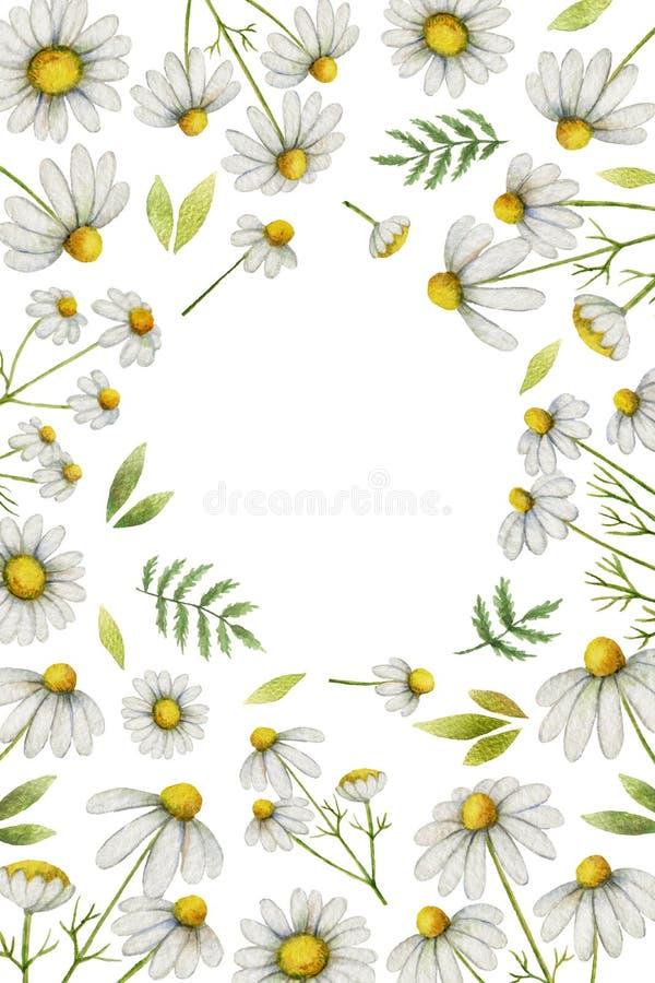 水彩春黄菊垂直的长方形框架 皇族释放例证