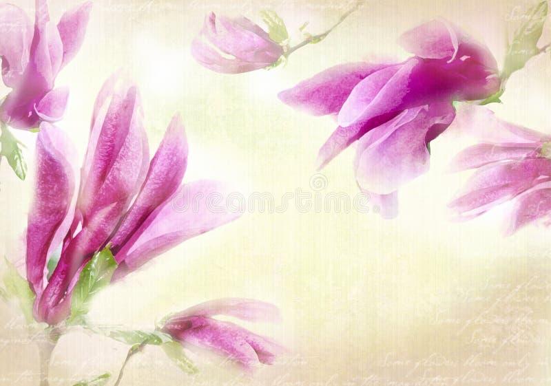 水彩木兰框架 与水彩桃红色招标木兰花的背景 皇族释放例证