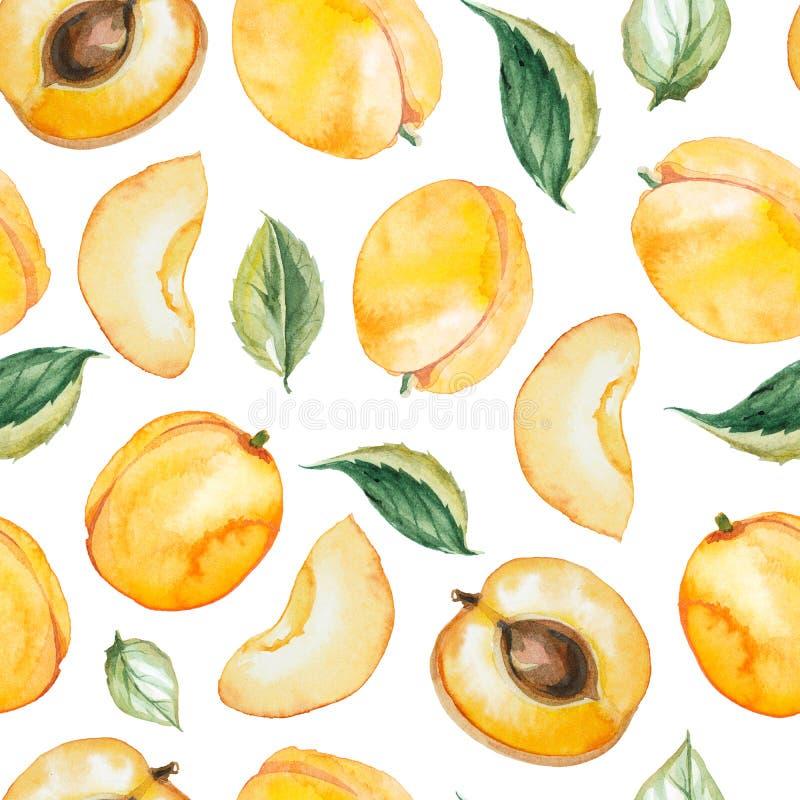 水彩杏子的无缝的样式 皇族释放例证