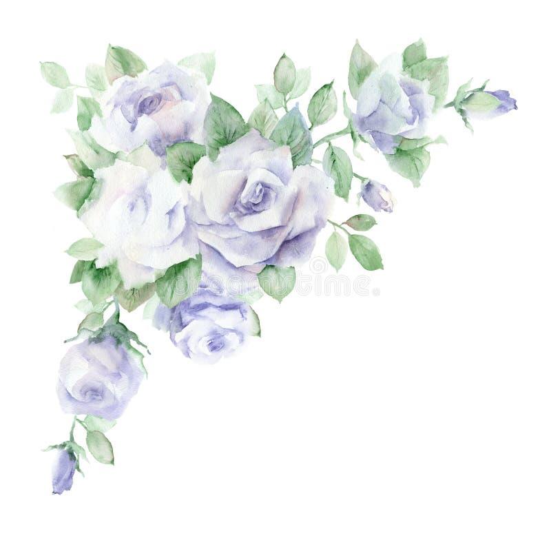 水彩柔和的淡色彩玫瑰 向量例证