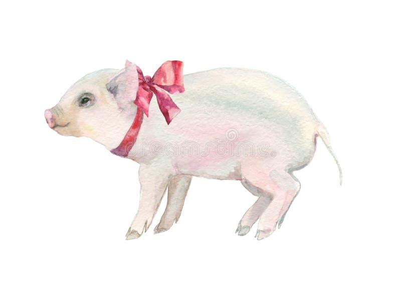 水彩桃红色猪 皇族释放例证