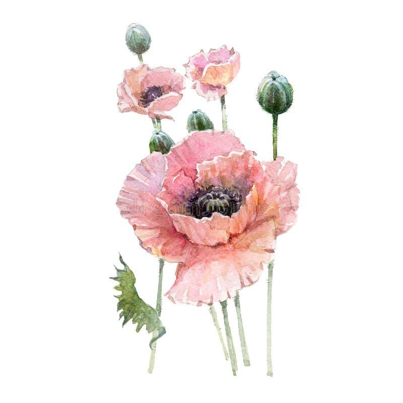 水彩桃红色鸦片花花束 皇族释放例证