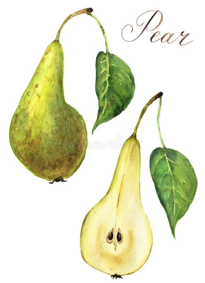 水彩梨集合 在白色背景隔绝的甜绿色果子食物例证 对设计、印刷品或者背景 向量例证