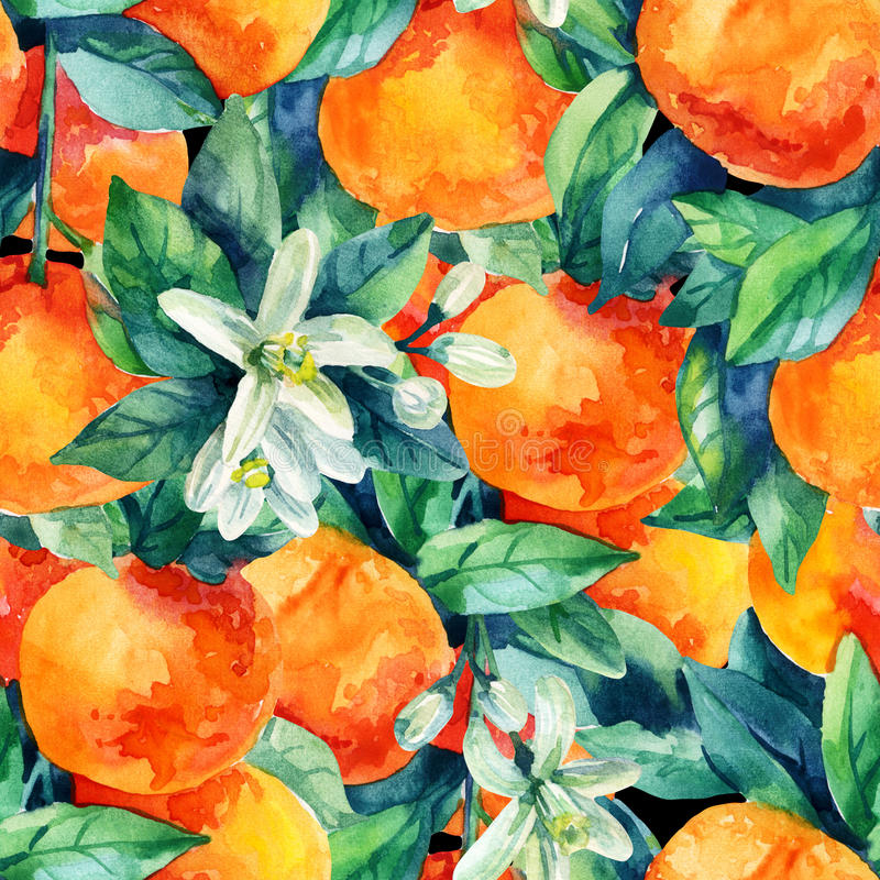 水彩橘子与叶子无缝的样式的果子分支 向量例证