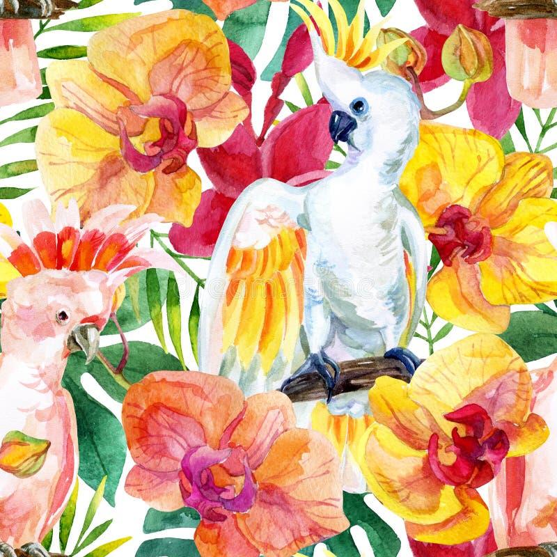 水彩澳大利亚美冠鹦鹉无缝的样式 向量例证