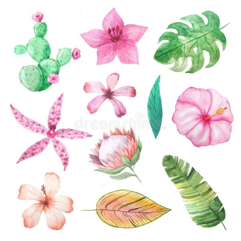 水彩热带夏天花和叶子 库存例证