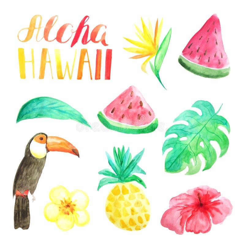 水彩热带异乎寻常的花、叶子和果子 库存例证