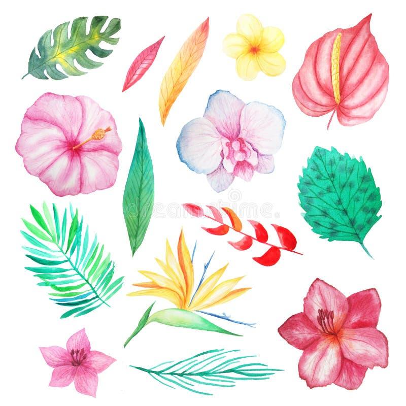 水彩热带异乎寻常的花和叶子 库存例证