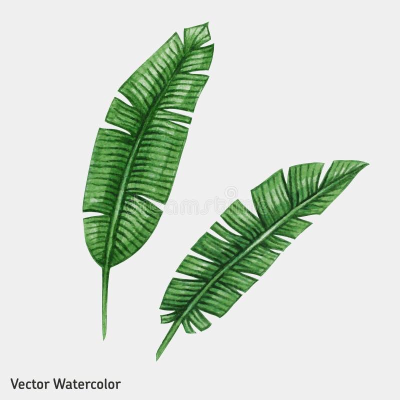 水彩热带棕榈叶 向量例证