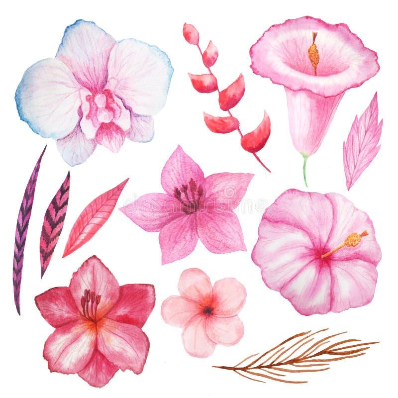 水彩热带花、叶子和植物 库存例证