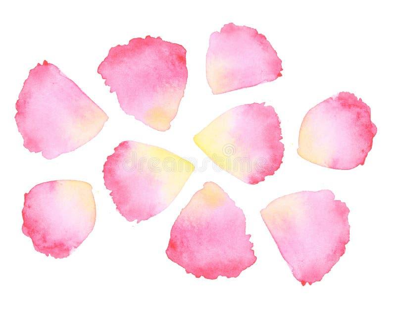 水彩玫瑰花瓣 库存例证