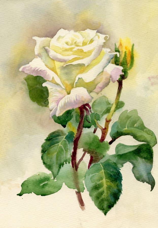 水彩玫瑰 皇族释放例证