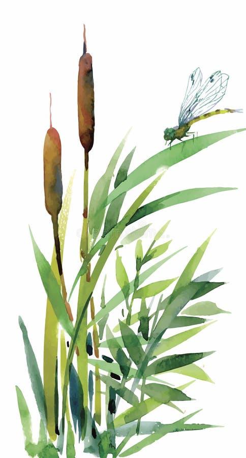 水彩用茅草盖与在白色背景隔绝的叶子特写镜头 手绘画 向量例证