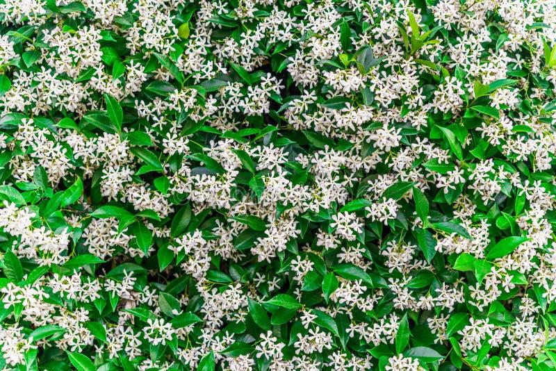 彩白花绿亮的墙体抽象背景 库存图片