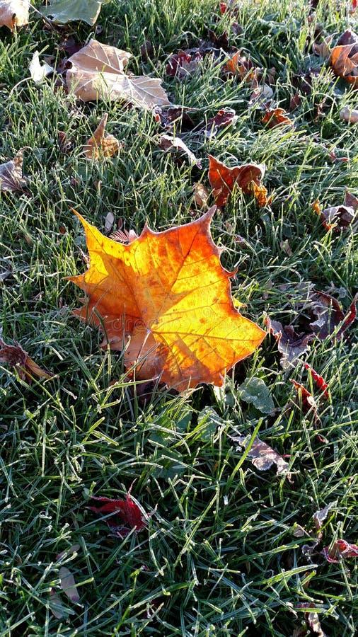 Download 彩色玻璃叶子 库存图片. 图片 包括有 玻璃, 弄脏, 自治权, 发光, 冷淡, 叶子, 晒裂 - 72354271