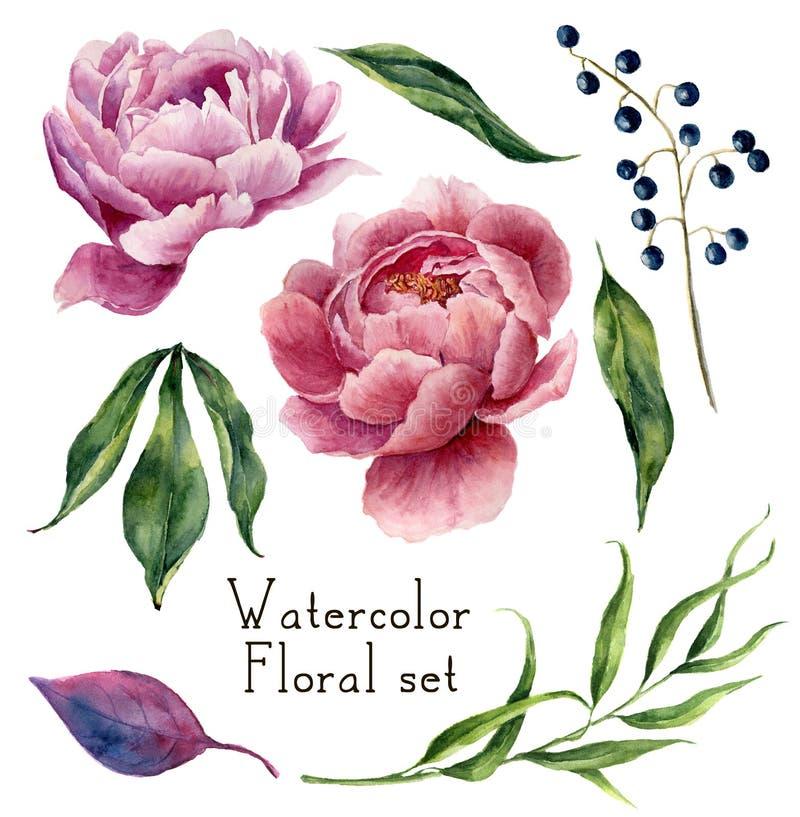 水彩花卉元素集 葡萄酒叶子、玉树、莓果和在白色背景隔绝的牡丹花 手 库存例证