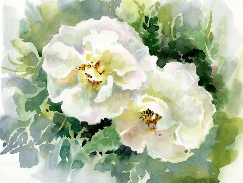 水彩花汇集:玫瑰 向量例证