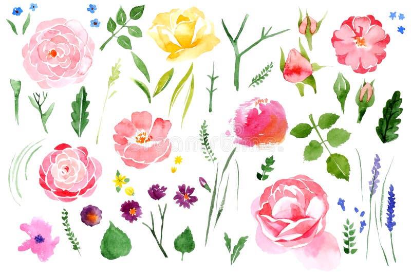 水彩花被设置在白色背景 免版税库存图片