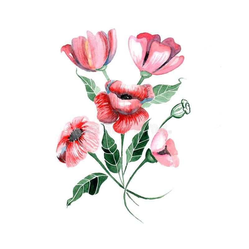 水彩花-与叶子的红色鸦片, 皇族释放例证
