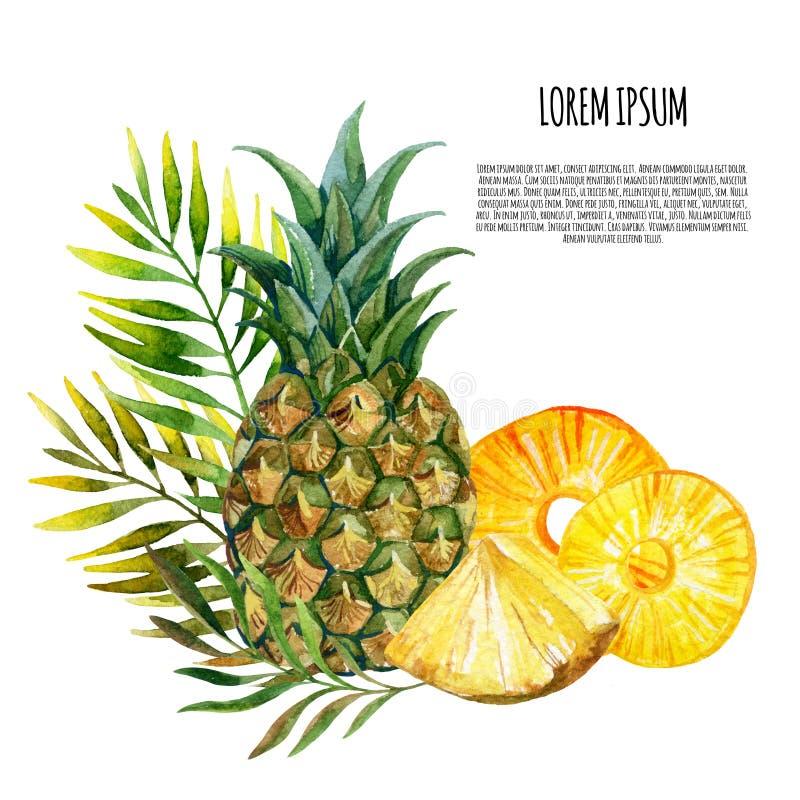 水彩菠萝集合 库存例证