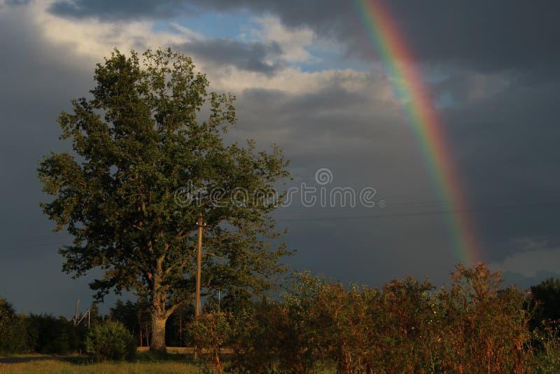 彩虹和橡木 库存照片