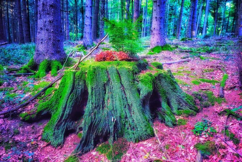 彩虹树在森林背景中 免版税图库摄影