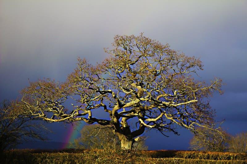 彩虹树 库存照片