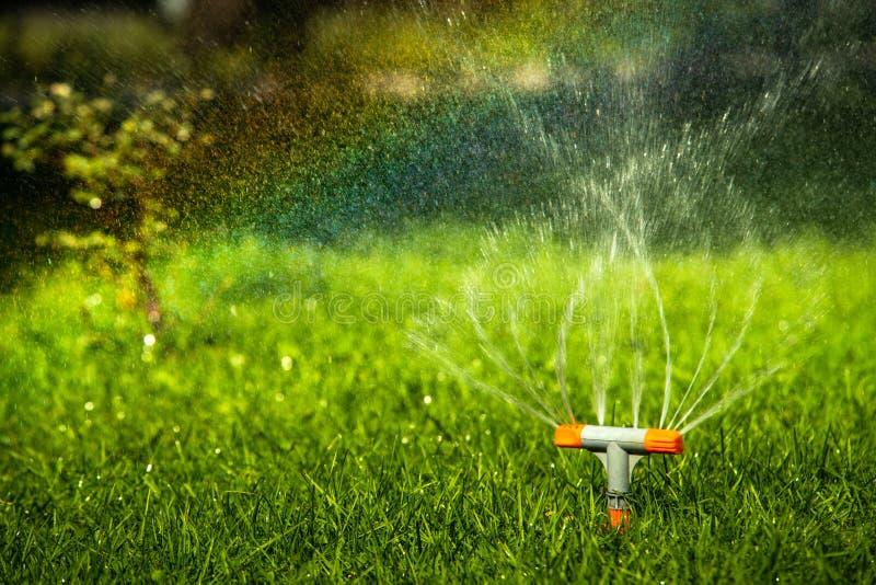 彩虹水下降灌溉系统夏日 库存图片