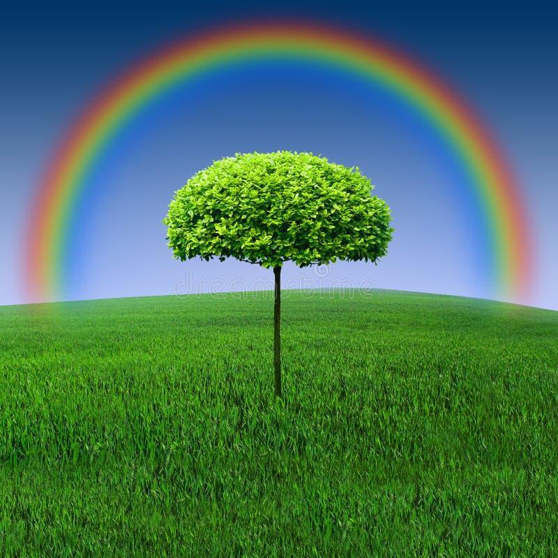 彩虹结构树 免版税库存图片