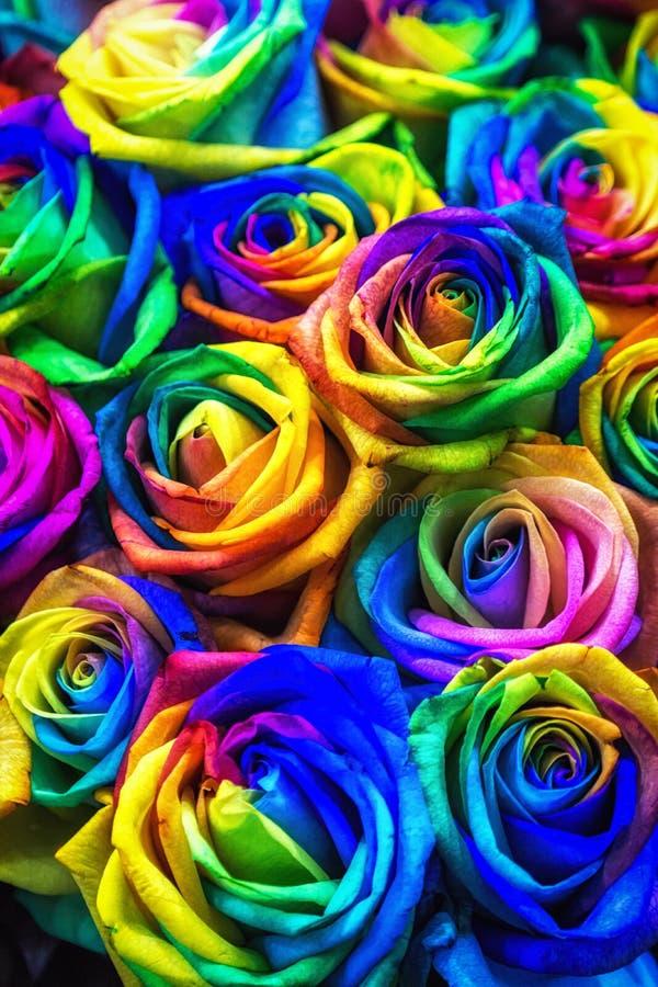 彩虹色的玫瑰 免版税图库摄影